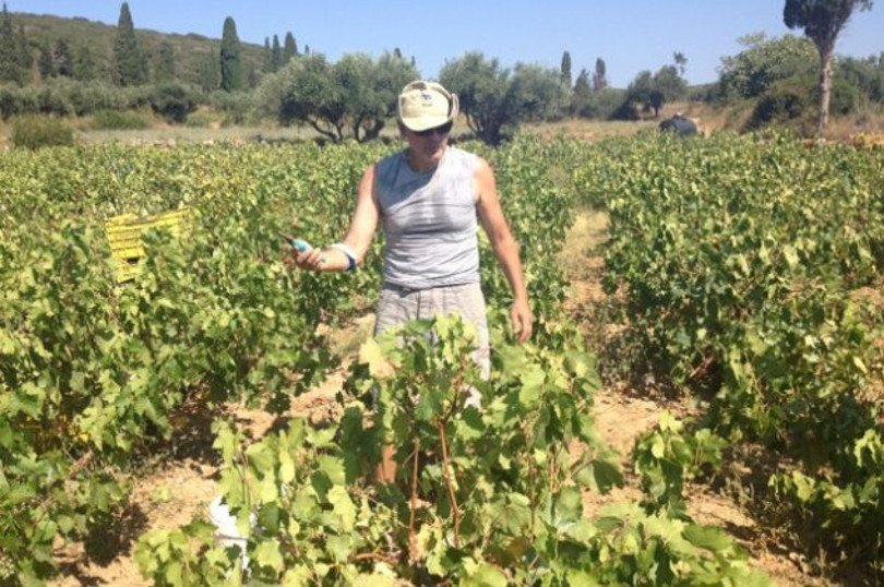 Σας καλημερίζω από τον τρύγο στα Κυπριωτιάνικα Κυθήρων – μία συγκλονιστική εμπειρία – Πάω γι' αγρότισσα!